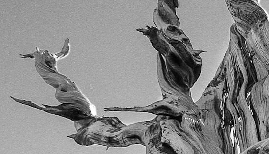 GIMP B&W Tree Grain Comparison